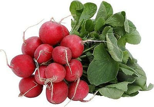 Heirloom EARLY SCARLET GLOBE Radish 500 SEEDS Non GMO Non Hybrid
