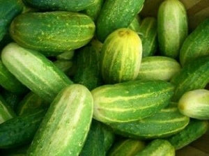 Heirloom Cucumber NATIONAL PICKLING❋100 SEEDS❋HEAVY YIELDS
