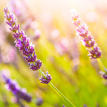 Load image into Gallery viewer, Calming 3-in-1 Shampoo, Bubble Bath & Wash w Lavender and Meadowsweet- 2-Pack 15 oz.