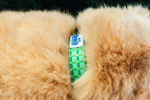 Adjustable Dog Collar from Recycled Water Bottles