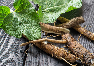 Burdock Root Tincture 1oz
