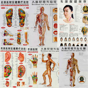 7 piece Human Meridian Points Chart in English for Acupuncture