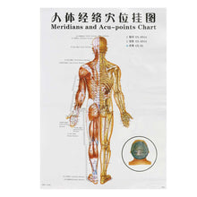 Load image into Gallery viewer, 7 piece Human Meridian Points Chart in English for Acupuncture