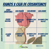 Caja de Crisantemos Disbud - Cremon Rosado - Crisantemos - ANDEAN FIELDS INTERNATIONAL - CUL ANDEAN shop - Flores al por mayor - Flores - colombia - flores bodas - flores matrimonios - flores eventos - flores floristas - DECORACION - FLORES DECORACION - FLORES COLOMBIA - CULTIVO DE FLORES COLOMBIA