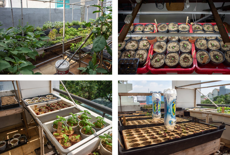 Plants being grown to be sold