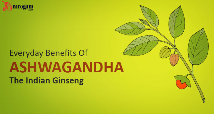 Everyday Benefits Of Ashwagandha, The Indian Ginseng