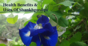 7 Best Health Benefits Of Shankhpushpi