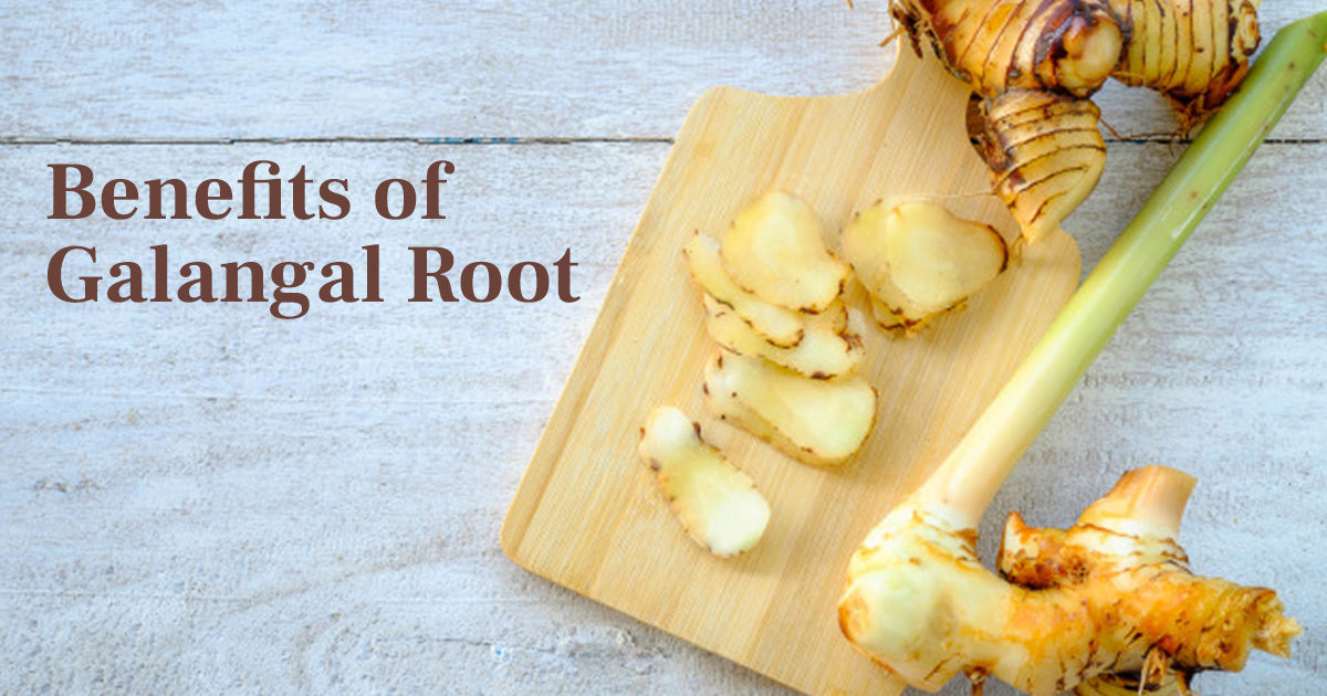 Benefits of Galangal Root