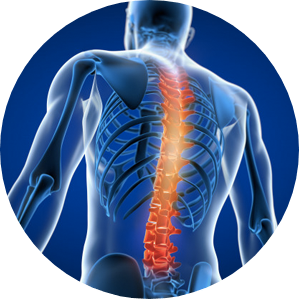 Relieves stiffness in spinal tissues