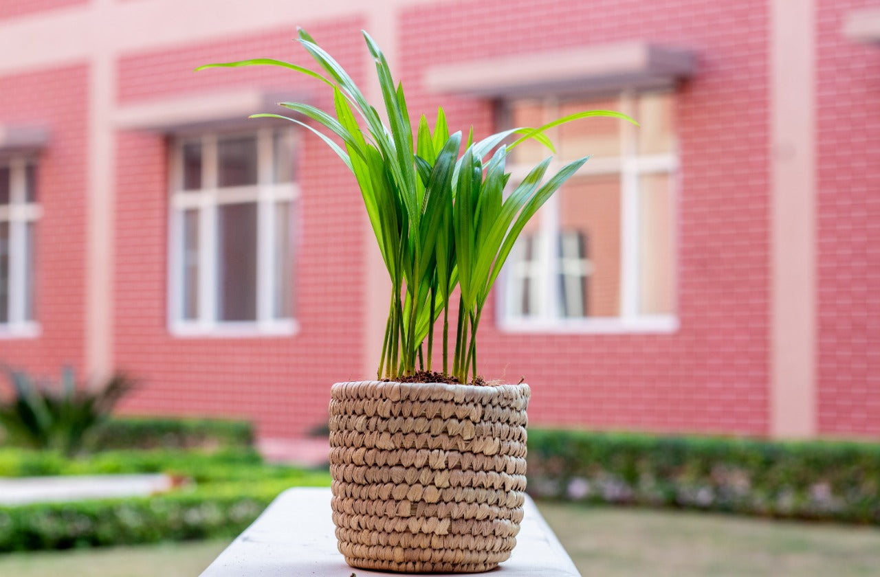 Woven Basket Planter in Natural | KalaGhar