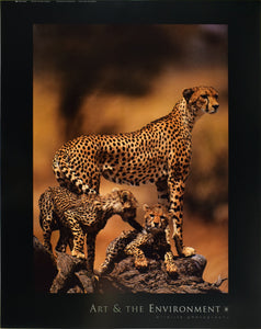 African Cheetah by Gerry Ellis