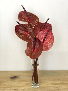 Color of the Week Anthuriums