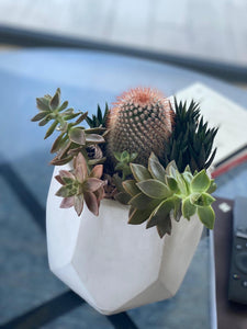 Sunset Vibes Cactus Arrangement - Casaflor