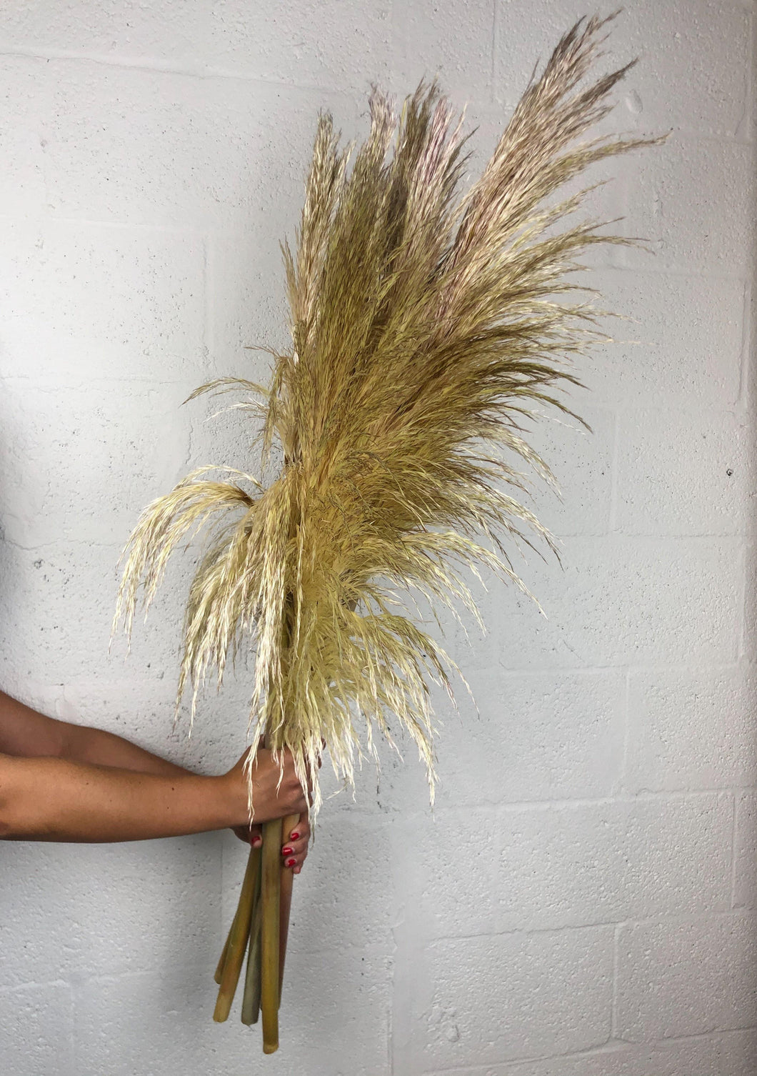 California Grown Pampas Grass