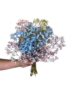Celebration! Baby's Breath - Casaflor