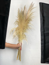 Load image into Gallery viewer, California Grown Pampas Grass