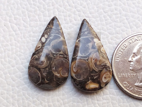 26x15x4mm, Natural Turritella Agate Teardrop Shape