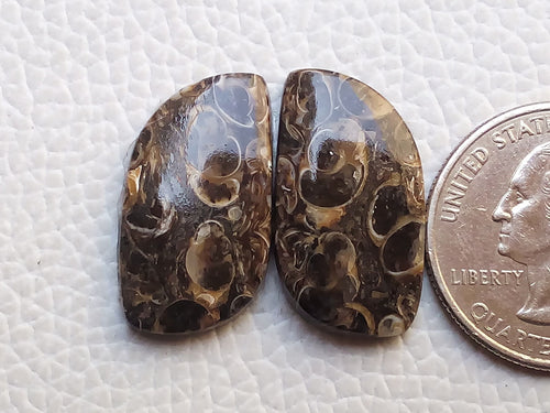 24x13x4mm, Natural Turritella Agate fancy Shape