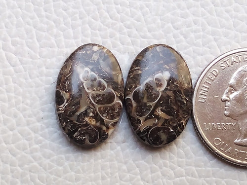 21x14x4mm, Natural Turritella Agate Oval Shape