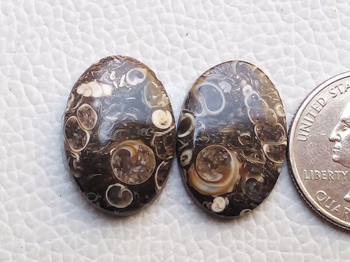 23x16x4mm, Natural Turritella Agate Oval Shape