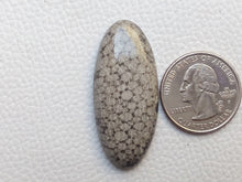 Load image into Gallery viewer, 43x19x6 mm Black Fossil Coral Natural Oval Shape
