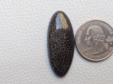 Load image into Gallery viewer, 38x16x5 mm Black Fossil Coral Natural Oval Shape