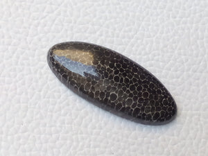 38x16x5 mm Black Fossil Coral Natural Oval Shape