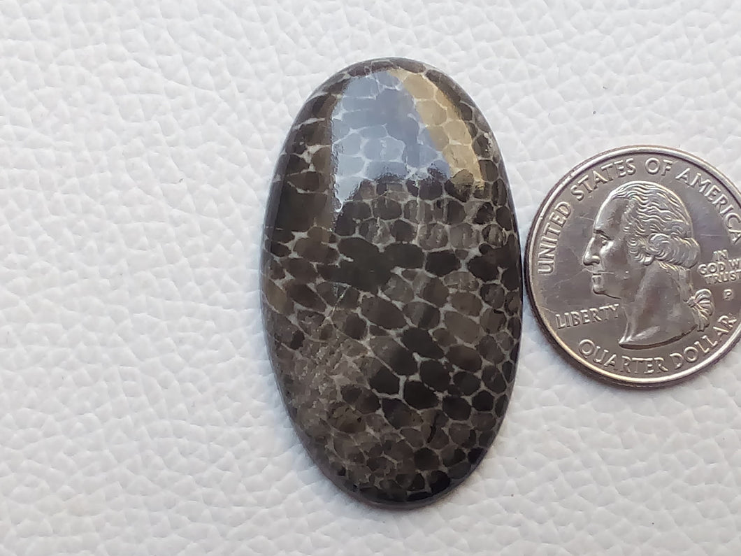 45x26x5 mm Black Fossil Coral Natural Oval Shape