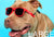Kaykos Dog Sunglasses: Large