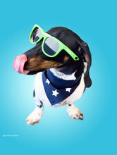 Load image into Gallery viewer, Kaykos Dog Sunglasses: Small