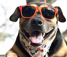Load image into Gallery viewer, Kaykos Dog Sunglasses: Large
