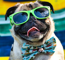 Load image into Gallery viewer, Kaykos Dog Sunglasses: Medium