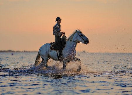 horse water ride