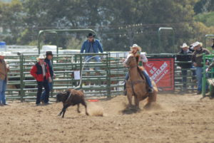 breakaway horse college rodeo