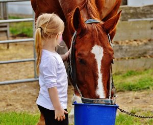Horse eating grain with young girl petting the horse