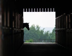Horse Guard horse in stable|Horse guard horse prevents stall boredom|Horse guard Super Weight Gain provides cool energy and fat.|Horse Guard helps with stall boredom|