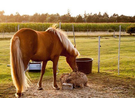 Summer's Cool Eats for Your Horse