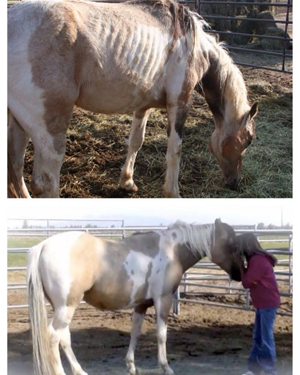 Before and After Paint on Super Weight Gain Supplement by Horse Guard