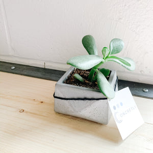Plant in Concrete Planter - Gray - Femme Wares Niagara Local Small Business