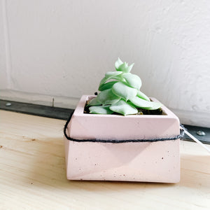 Plant in Concrete Planter - Blush - Femme Wares Niagara Local Small Business