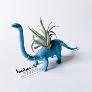 Blue Dinosaur Air Planter - Longneck - Femme Wares Niagara Local Small Business
