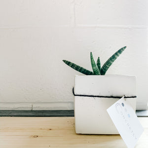 Large Plant in Concrete Planter - Gray Square - Femme Wares Niagara Local Small Business