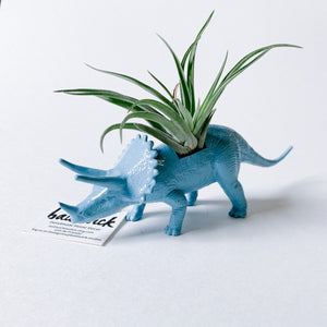 Blue Dinosaur Air Planter - Triceratops - Femme Wares Niagara Local Small Business