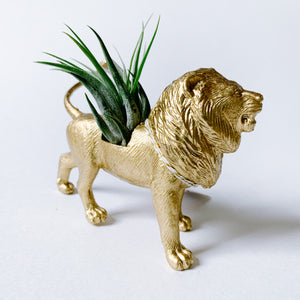 Gold Animal Air Planter - Lion - Femme Wares Niagara Local Small Business