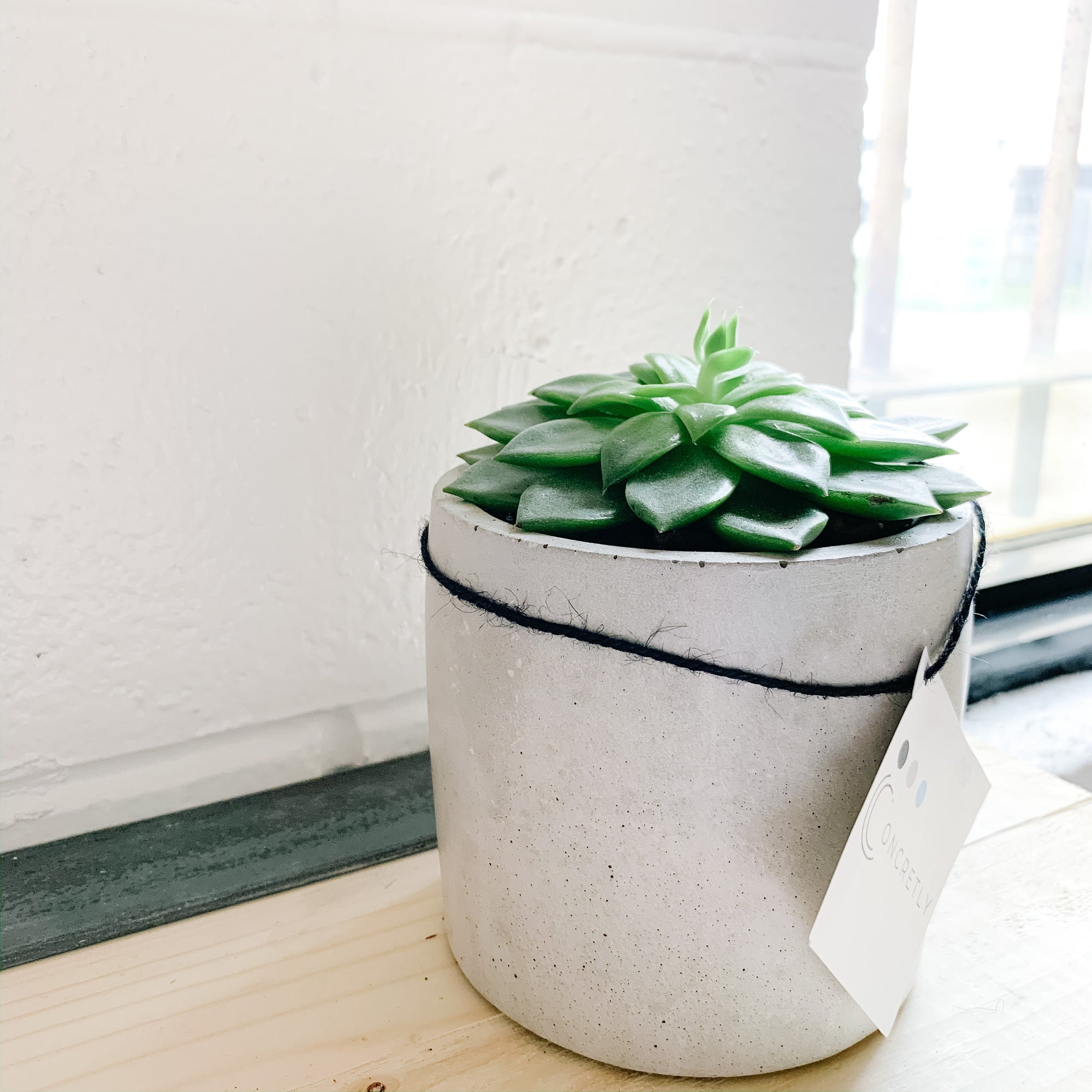 Large Plant in Concrete Planter - Gray Round - Femme Wares Niagara Local Small Business