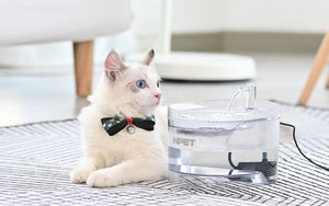 Cat Water Fountain- which one will be worth to recommend?