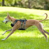 NPET Dog Harness No-Pull Pet Vest for Puppy Large Dogs
