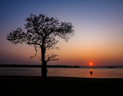 Tree and Buoy at sunset