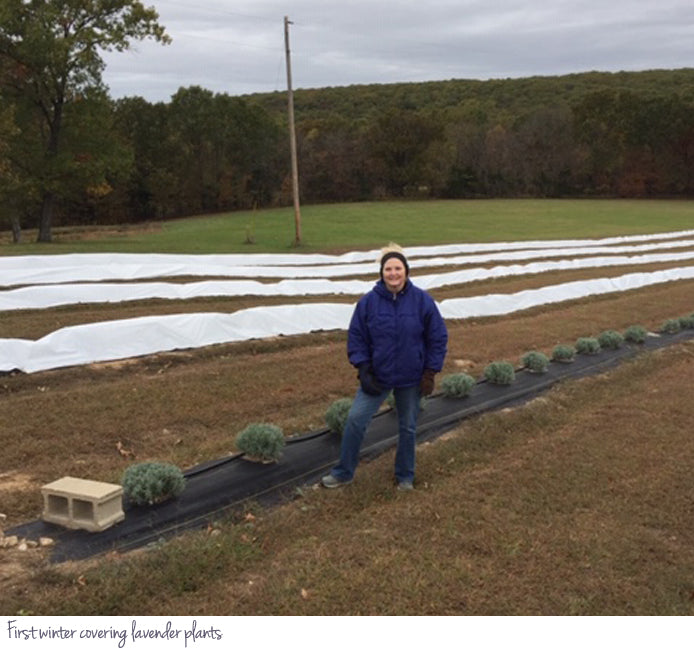 First winter covering lavender plants