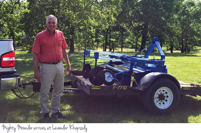 Mighty Mounder arrives at Lavender Rhapsody